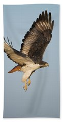 Augur Buzzard Buteo Augur Flying Hand Towel by Panoramic Images