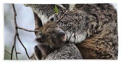 Baby Koala V2 Hand Towel by Douglas Barnard