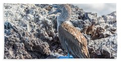 Blue Footed Booby Hand Towel by Jess Kraft
