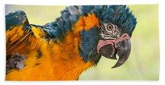 Blue Throated Macaw Hand Towel by Jamie Pham