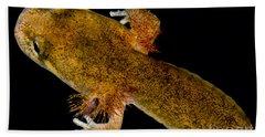 California Giant Salamander Larva Hand Towel by Dant� Fenolio