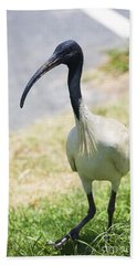 Carpark Ibis Hand Towel by Jorgo Photography - Wall Art Gallery