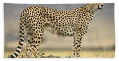 Cheetah Acinonyx Jubatus On Termite Hand Towel by Winfried Wisniewski