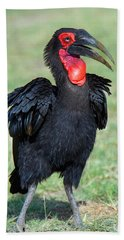 Close-up Of Ground Hornbill Bucorvidae Hand Towel by Panoramic Images