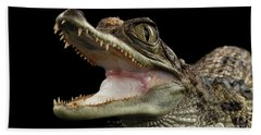 Closeup Young Cayman Crocodile, Reptile With Opened Mouth Isolated On Black Background Hand Towel by Sergey Taran