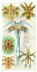 Copepods, Nauplius Larvae Hand Towel by Science Source