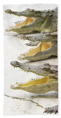 Crocodile Choir Hand Towel by Jorgo Photography - Wall Art Gallery