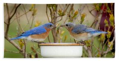 Early Bird Breakfast For Two Hand Towel by Bill Pevlor