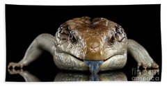 Eastern Blue-tongued Skink, Tiliqua Scincoides, Isolated On Black Background Hand Towel by Sergey Taran