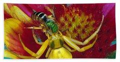 Goldenrod Crab Spider Misumena Vatia Hand Towel by Panoramic Images