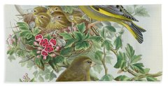 Greenfinch Hand Towel by John Gould