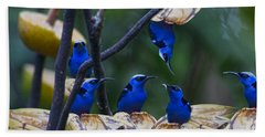 Honeycreeper Hand Towel by Betsy Knapp