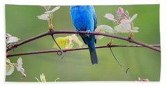 Indigo Bunting Perched Square Hand Towel by Bill Wakeley