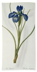Iris Xyphioides Hand Towel by Pierre Joseph Redoute