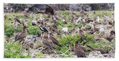 Juveniles Red Footed Boobies Hand Towel by Jess Kraft
