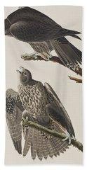 Labrador Falcon Hand Towel by John James Audubon