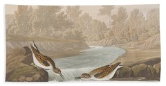 Little Sandpiper Hand Towel by John James Audubon