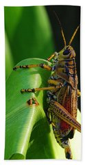 Lubber Grasshopper II Hand Towel by Richard Rizzo