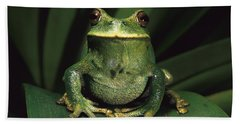 Marsupial Frog Gastrotheca Orophylax Hand Towel by Pete Oxford