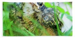 Bath Towel featuring the photograph Nestling, Juvenile Male American Robin by A Gurmankin
