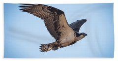 Osprey In Flight Hand Towel by Paul Freidlund