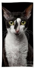 Portrait Of Cornish Rex Looking In Camera Isolated On Black  Hand Towel by Sergey Taran