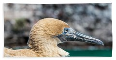 Red Footed Booby Juvenile Hand Towel by Jess Kraft