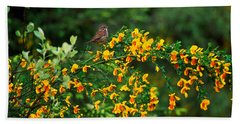 Song Sparrow Bird On Blooming Scotch Hand Towel by Panoramic Images