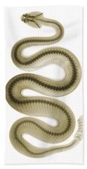 Southern Pacific Rattlesnake, X-ray Hand Towel by Ted Kinsman