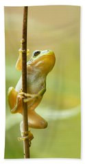 The Pole Dancer - Climbing Tree Frog  Hand Towel by Roeselien Raimond