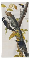 Three Toed Woodpecker Hand Towel by John James Audubon