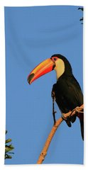 Toco Toucan Hand Towel by Bruce J Robinson