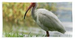 White Ibis On The Florida Shore  Hand Towel by Saija Lehtonen