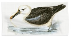 Yellow Nosed Albatross Hand Towel by English School