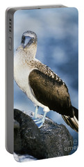 Blue-footed Booby Portable Battery Charger by Art Wolfe