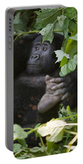 Mountain Gorilla Gorilla Beringei Portable Battery Charger by Panoramic Images