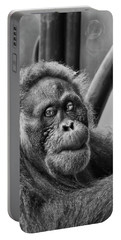 Orangutan Mama Portable Battery Charger by Phill Doherty