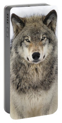 Timber Wolf Portrait Portable Battery Charger by Tony Beck