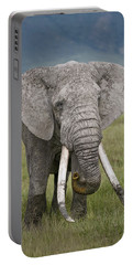 African Elephant Loxodonta Africana Portable Battery Charger by Panoramic Images