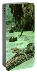 American Alligator Portable Battery Charger by Gregory G. Dimijian, M.D.