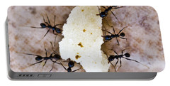 Ant Joint Venture Portable Battery Charger by Heiko Koehrer-Wagner