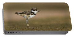 Baby Killdeer Portable Battery Charger by Bryan Keil