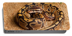 Ball Python Python Regius Coiled On Rock Portable Battery Charger by David Kenny
