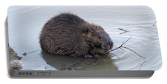 Beaver Chewing On Twig Portable Battery Charger by Chris Flees