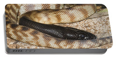 Black-headed Python Portable Battery Charger by William H. Mullins