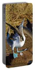 Blue-footed Booby Courtship Behavior Portable Battery Charger by William H. Mullins