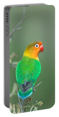 Close-up Of A Fischers Lovebird Portable Battery Charger by Panoramic Images