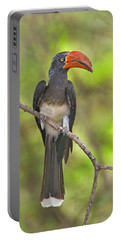 Crowned Hornbill Perching On A Branch Portable Battery Charger by Panoramic Images