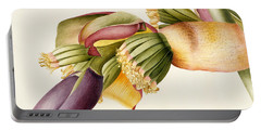 Flower Of The Banana Tree  Portable Battery Charger by Georg Dionysius Ehret