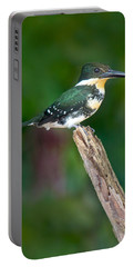 Green Kingfisher Chloroceryle Portable Battery Charger by Panoramic Images